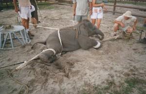 utrpenie v cirkusoch